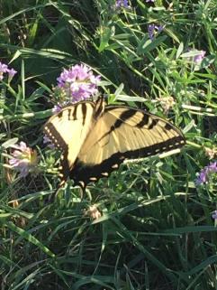 More pollinators!