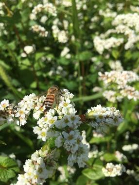 Pollinators!