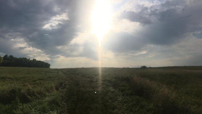 pasture-a-plenty